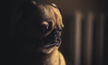 Dog Bite Lawsuit New York